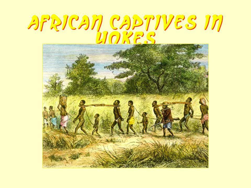 African Captives in Yokes