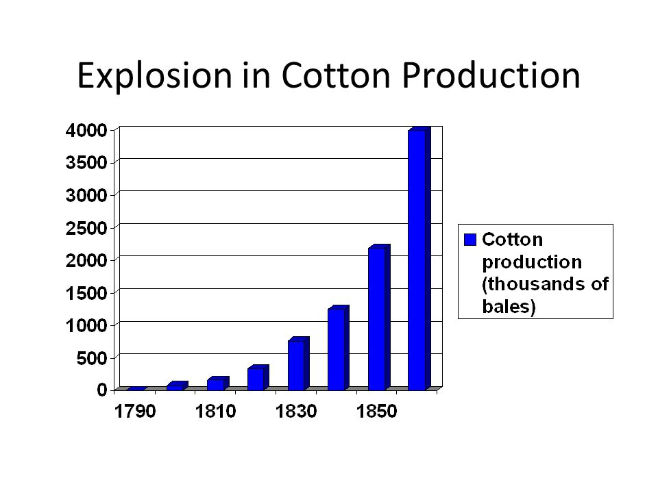 Explosion in Cotton Production