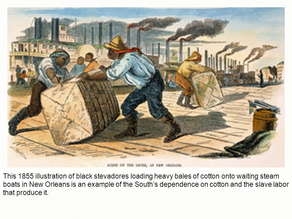 This 1855 illustration of black stevadores loading heavy bales of cotton onto waiting steam boats in New Orleans is an example of the South's dependence on cotton and the slave labor that produce it.