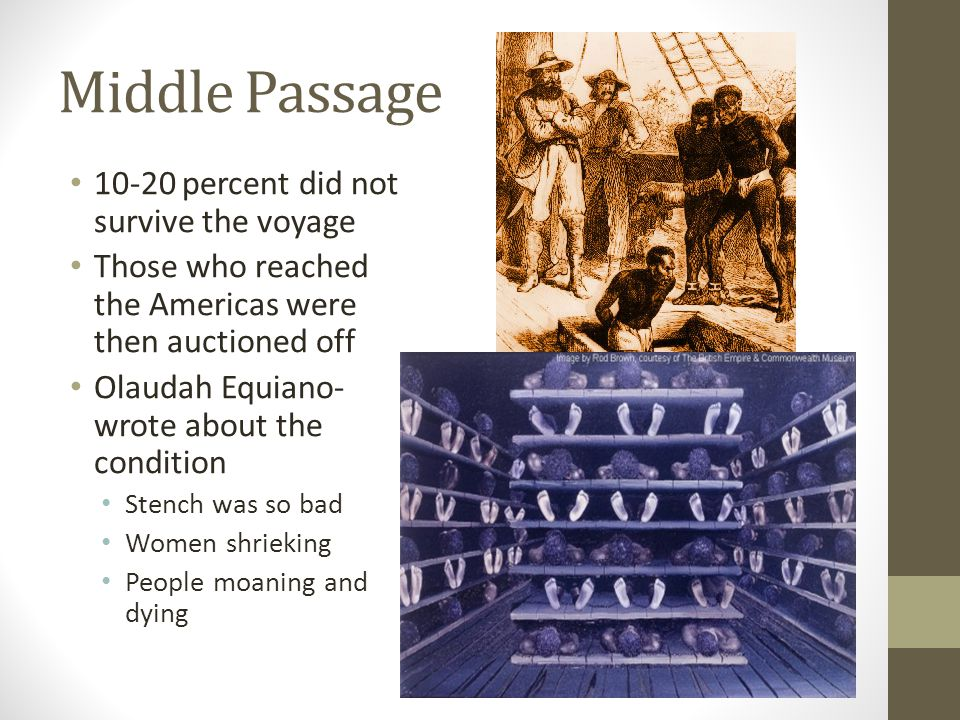 Middle Passage 10-20 percent did not survive the voyage