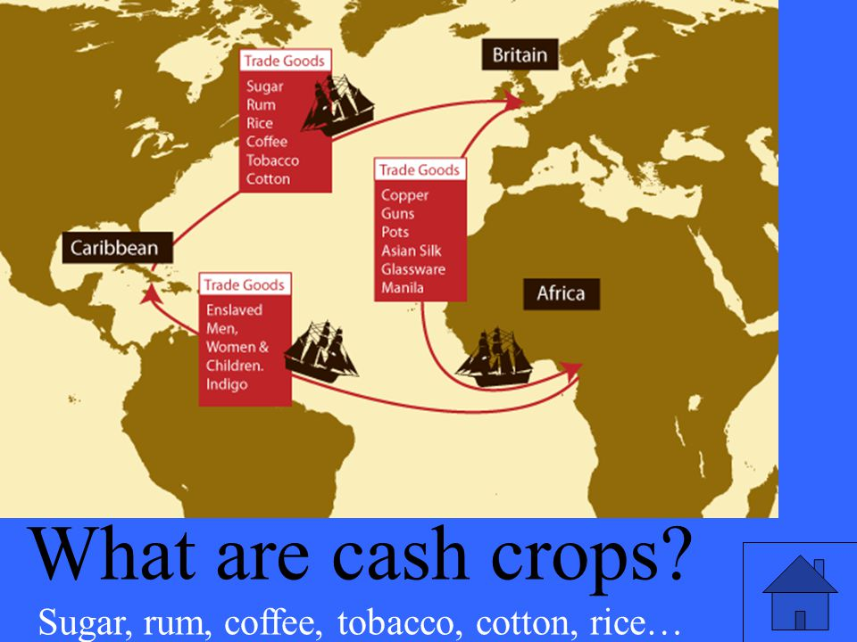 Sugar, rum, coffee, tobacco, cotton, rice…