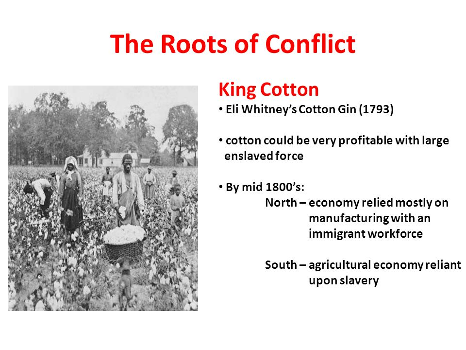 The Roots of Conflict King Cotton Eli Whitney's Cotton Gin (1793)