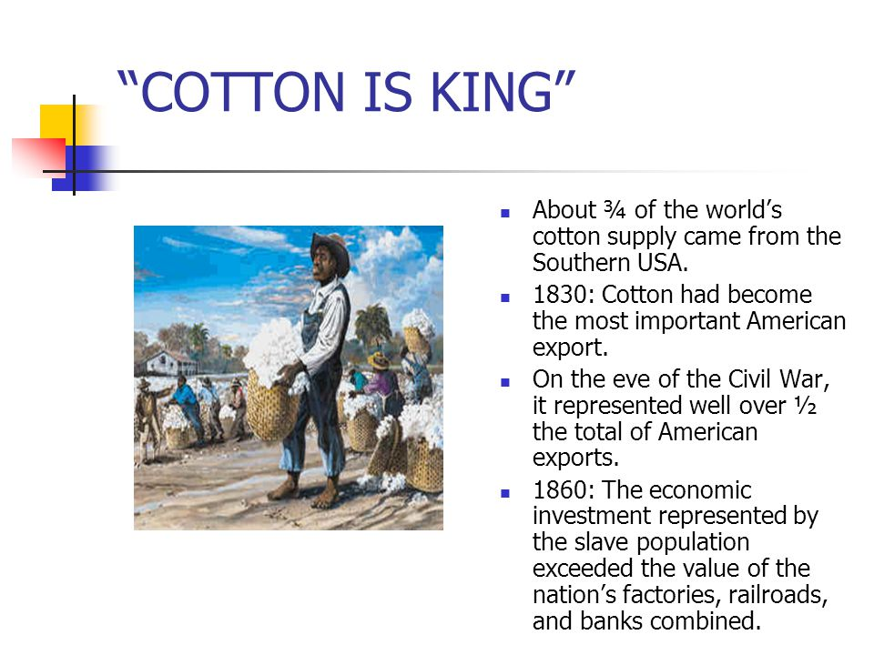 COTTON IS KING About ¾ of the world's cotton supply came from the Southern USA. 1830: Cotton had become the most important American export.