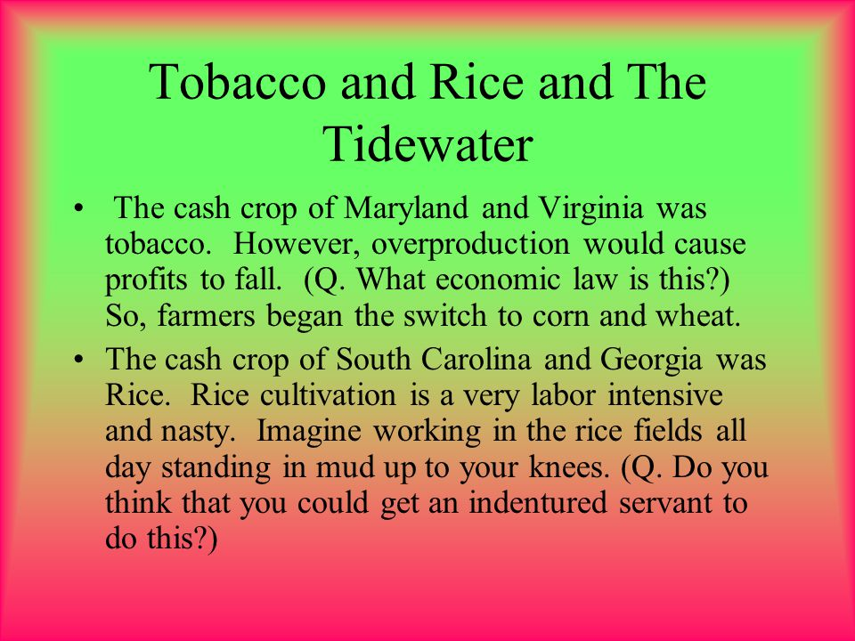 Tobacco and Rice and The Tidewater