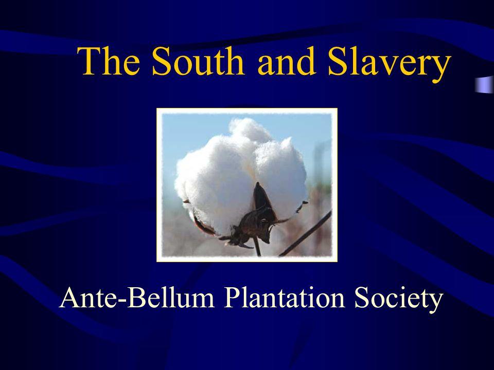 Ante-Bellum Plantation Society
