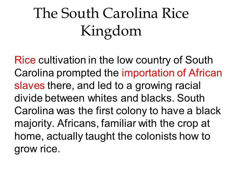 The South Carolina Rice Kingdom