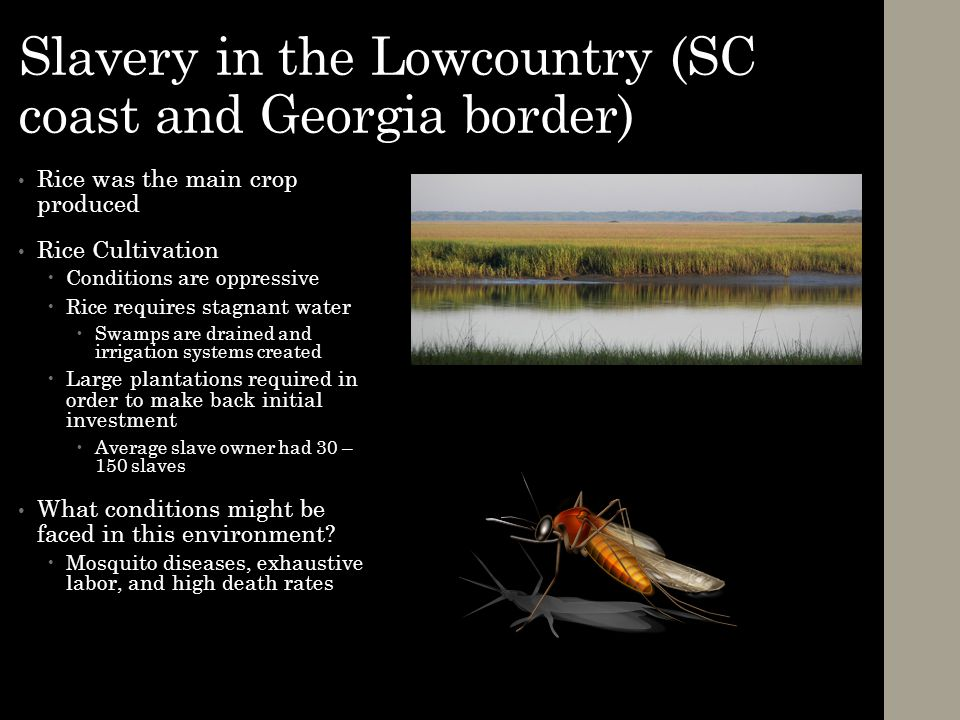 Slavery in the Lowcountry (SC coast and Georgia border)