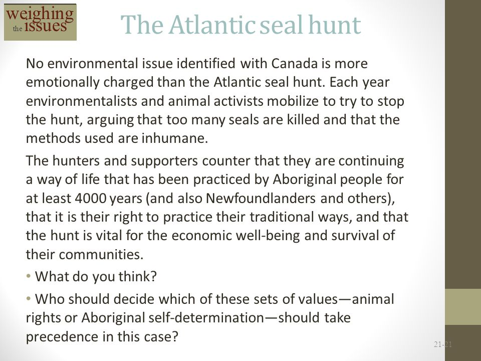 The Atlantic seal hunt weighing the issues