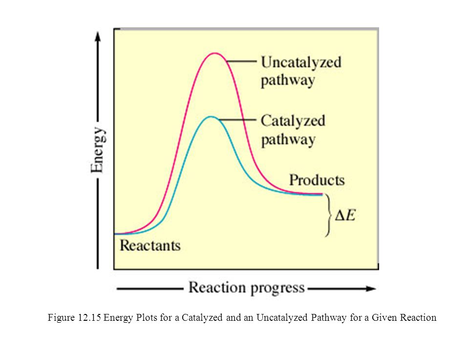 Figure 12.15 Energy Plots for a Catalyzed and an Uncatalyzed Pathway for a Given Reaction