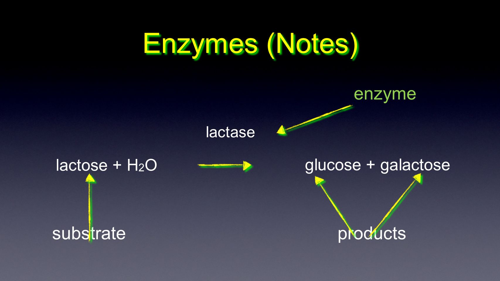 Enzymes (Notes) enzyme substrate products lactose + H2O