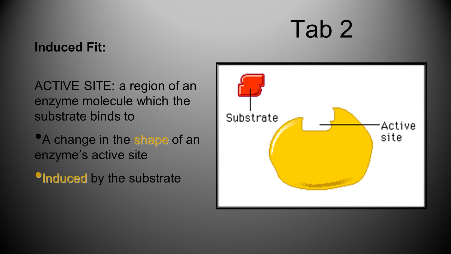 Tab 2 Induced Fit: ACTIVE SITE: a region of an enzyme molecule which the substrate binds to. A change in the shape of an enzyme's active site.