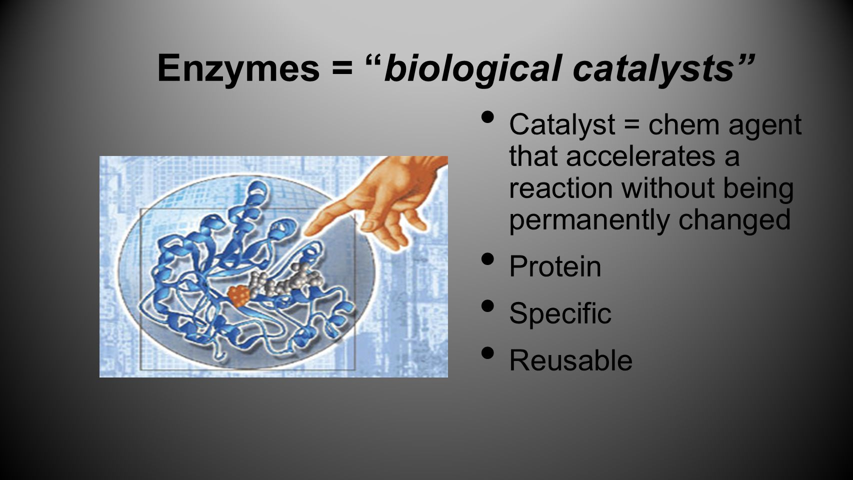 Enzymes = biological catalysts
