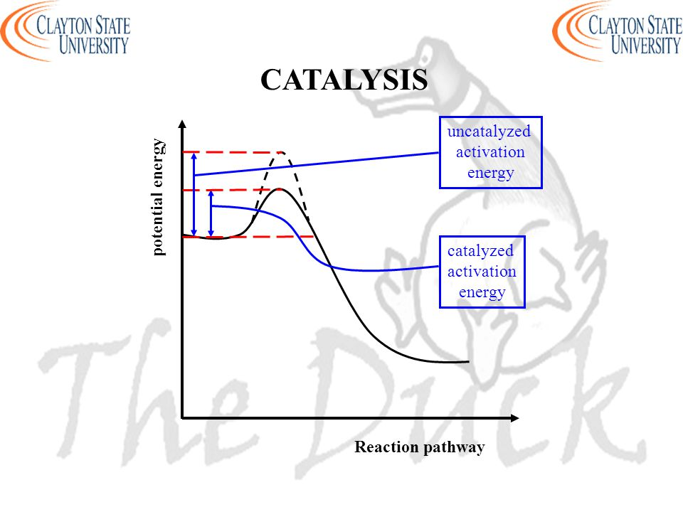 CATALYSIS uncatalyzed activation energy potential energy catalyzed