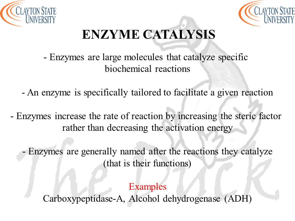 ENZYME CATALYSIS - Enzymes are large molecules that catalyze specific