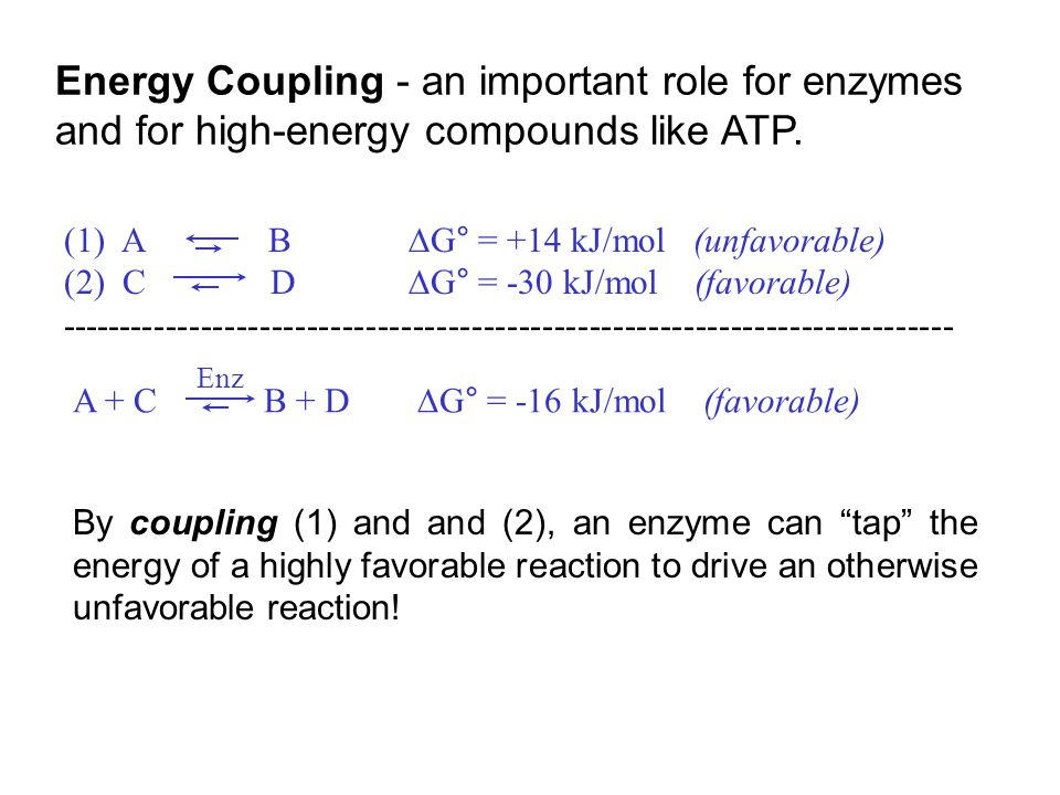 Energy Coupling - an important role for enzymes and for high-energy compounds like ATP.