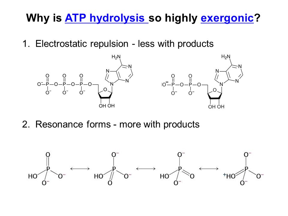 Why is ATP hydrolysis so highly exergonic