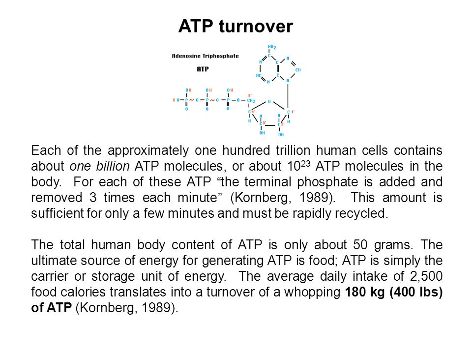 ATP turnover