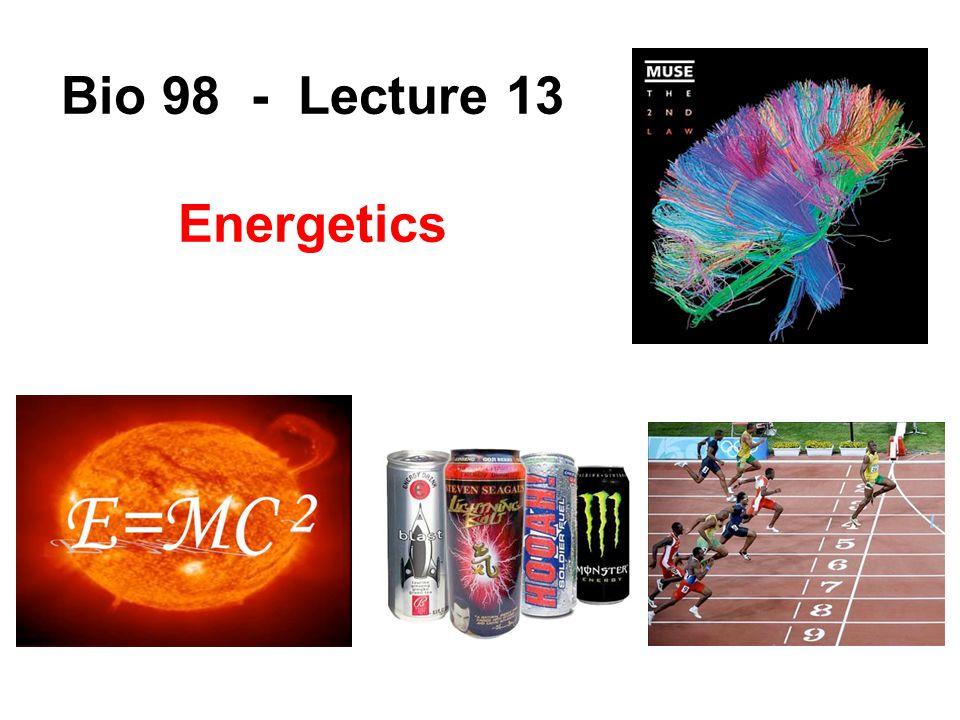 Bio 98 - Lecture 13 Energetics