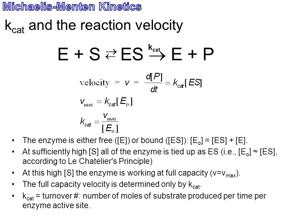 E + S  ES  E + P  kcat and the reaction velocity