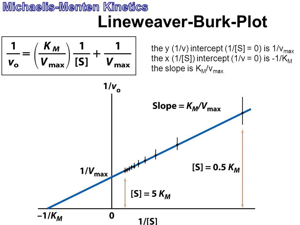 Lineweaver-Burk-Plot