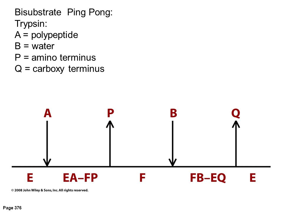 Bisubstrate Ping Pong: Trypsin: A = polypeptide B = water