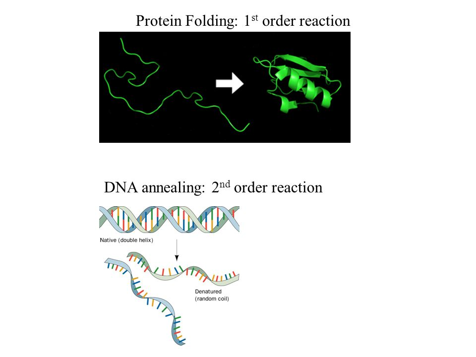 Protein Folding: 1st order reaction