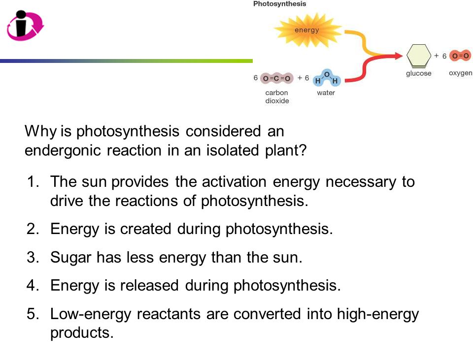 Why is photosynthesis considered an endergonic reaction in an isolated plant