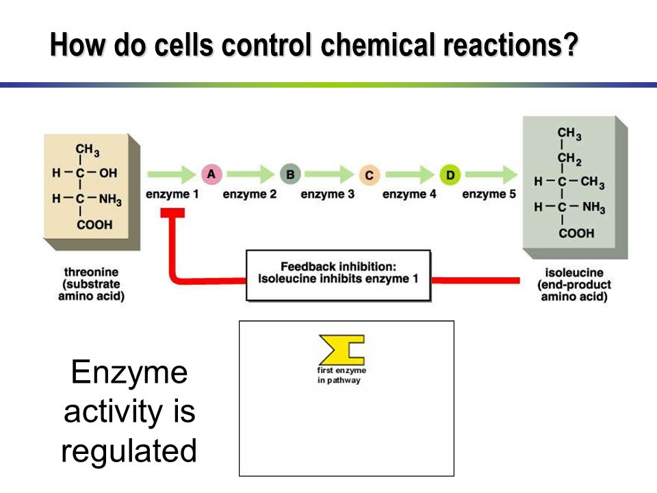 Enzyme activity is regulated