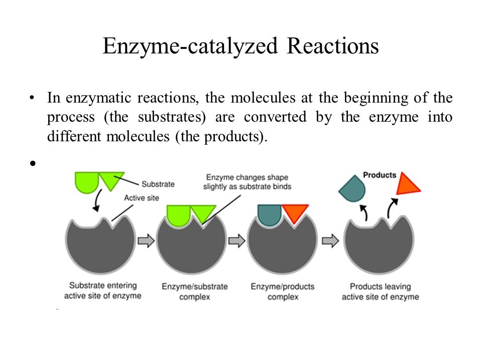 Enzyme-catalyzed Reactions