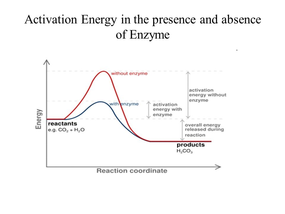 Activation Energy in the presence and absence of Enzyme