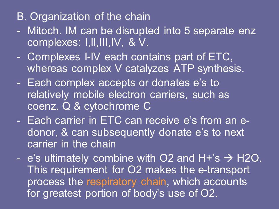 B. Organization of the chain