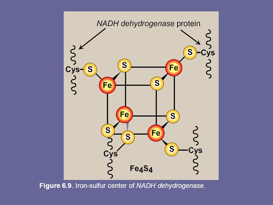 Figure 6.9. Iron-sulfur center of NADH dehydrogenase.