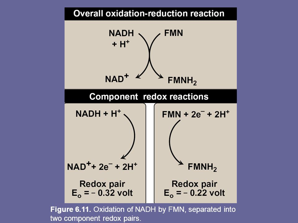 Figure 6.11. Oxidation of NADH by FMN, separated into two component redox pairs.