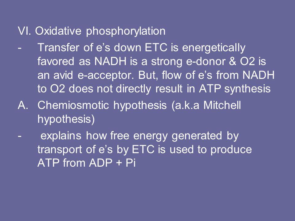 VI. Oxidative phosphorylation