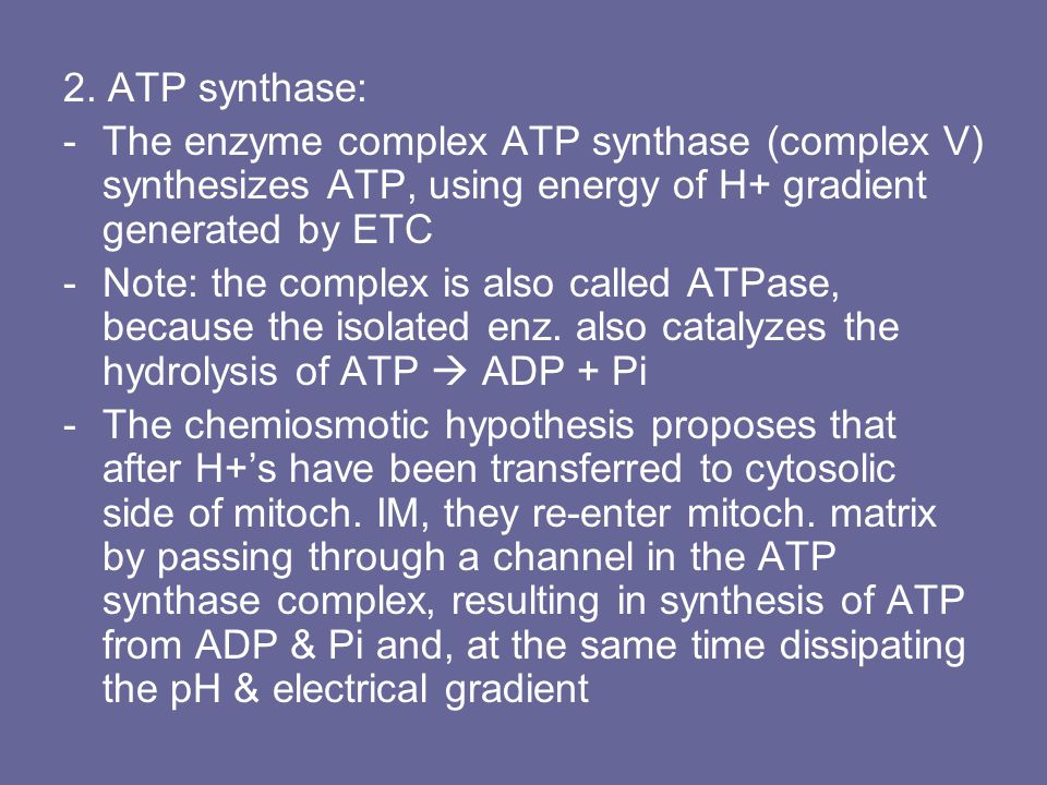 2. ATP synthase: The enzyme complex ATP synthase (complex V) synthesizes ATP, using energy of H+ gradient generated by ETC.