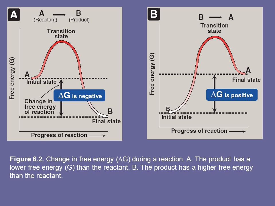 Figure 6. 2. Change in free energy (∆G) during a reaction. A