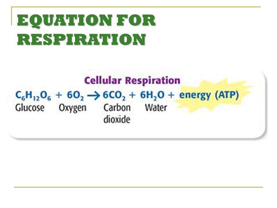 EQUATION FOR RESPIRATION