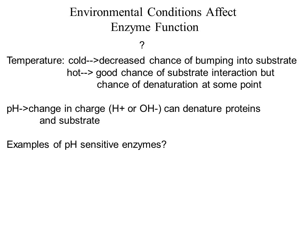 Environmental Conditions Affect Enzyme Function