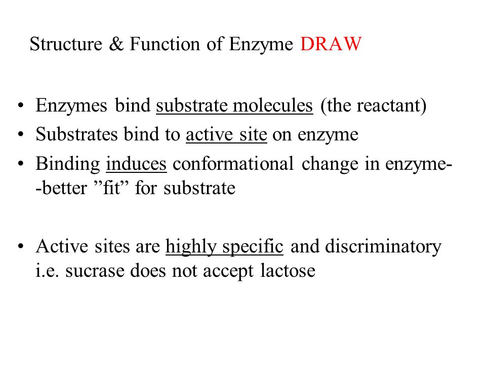 Structure & Function of Enzyme DRAW