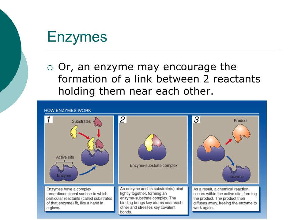 Enzymes Or, an enzyme may encourage the formation of a link between 2 reactants holding them near each other.