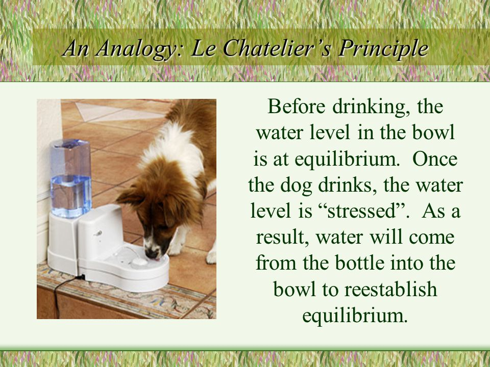 An Analogy: Le Chatelier's Principle