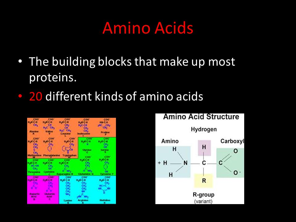 Amino Acids The building blocks that make up most proteins.