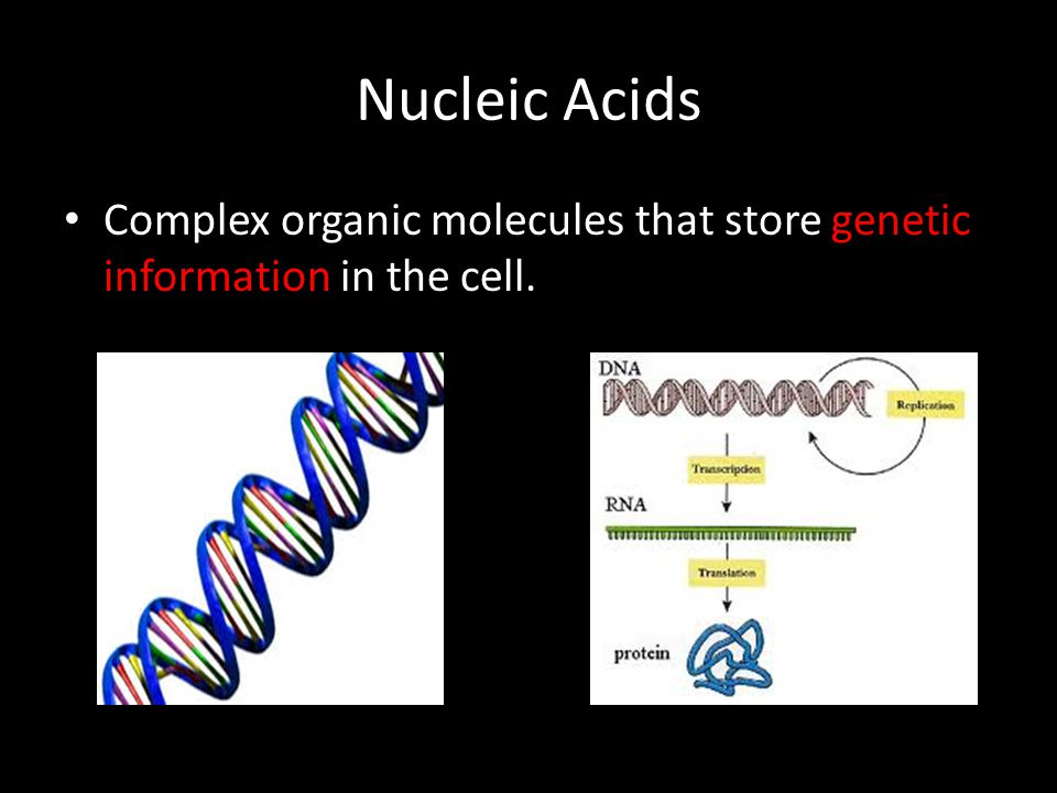 Nucleic Acids Complex organic molecules that store genetic information in the cell.