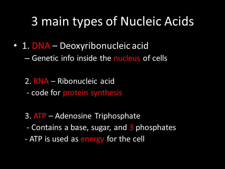 3 main types of Nucleic Acids