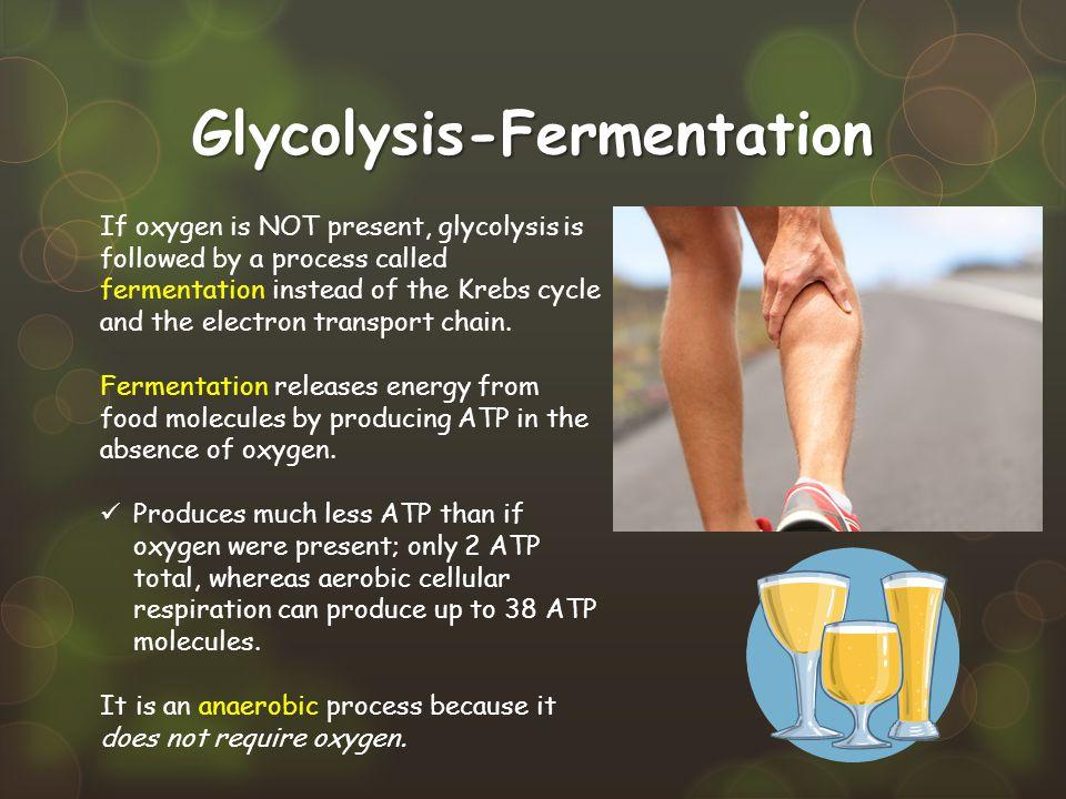 Glycolysis-Fermentation