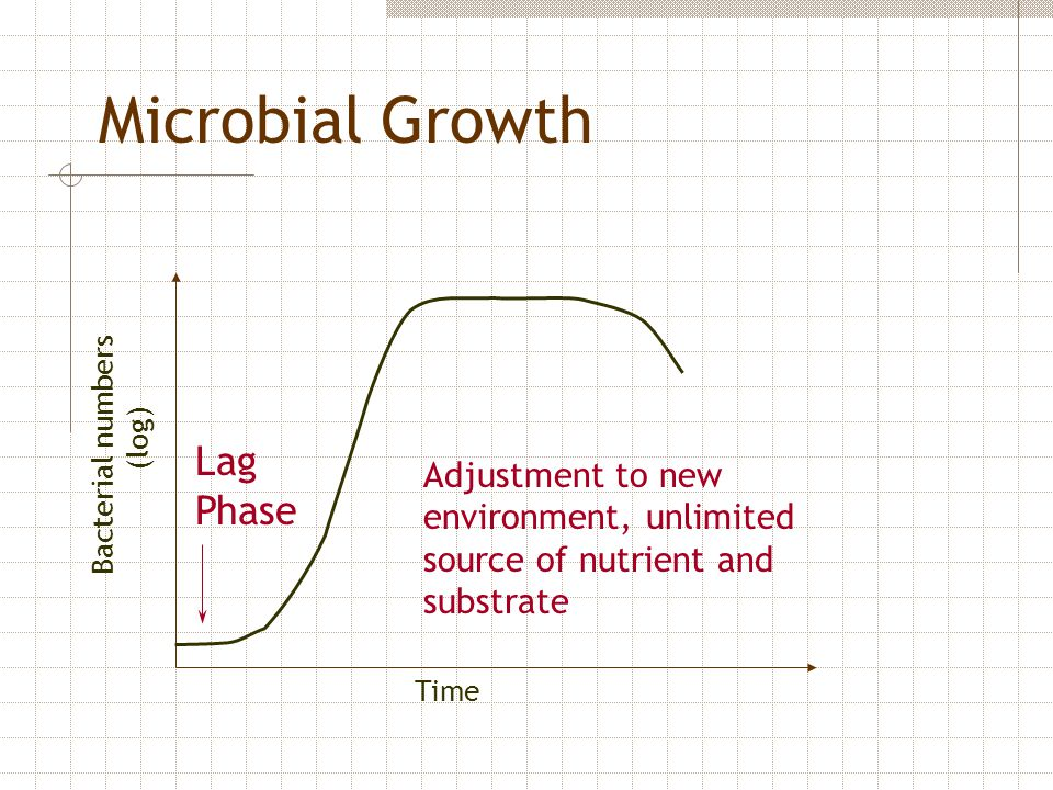 Microbial Growth Lag Phase