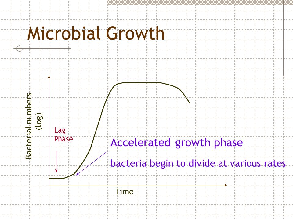 Microbial Growth Accelerated growth phase
