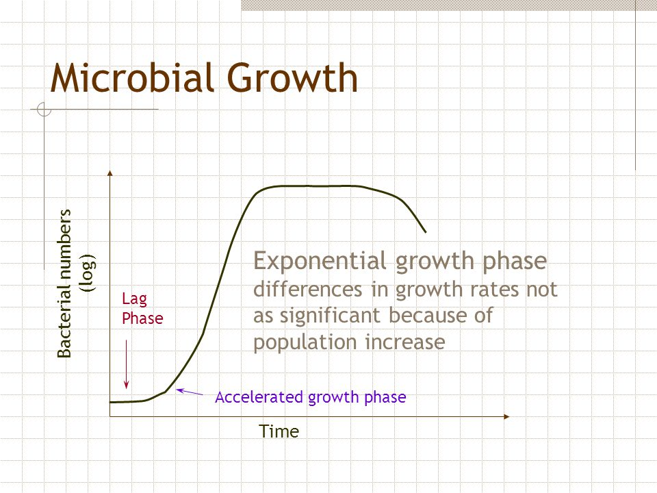Microbial Growth Exponential growth phase