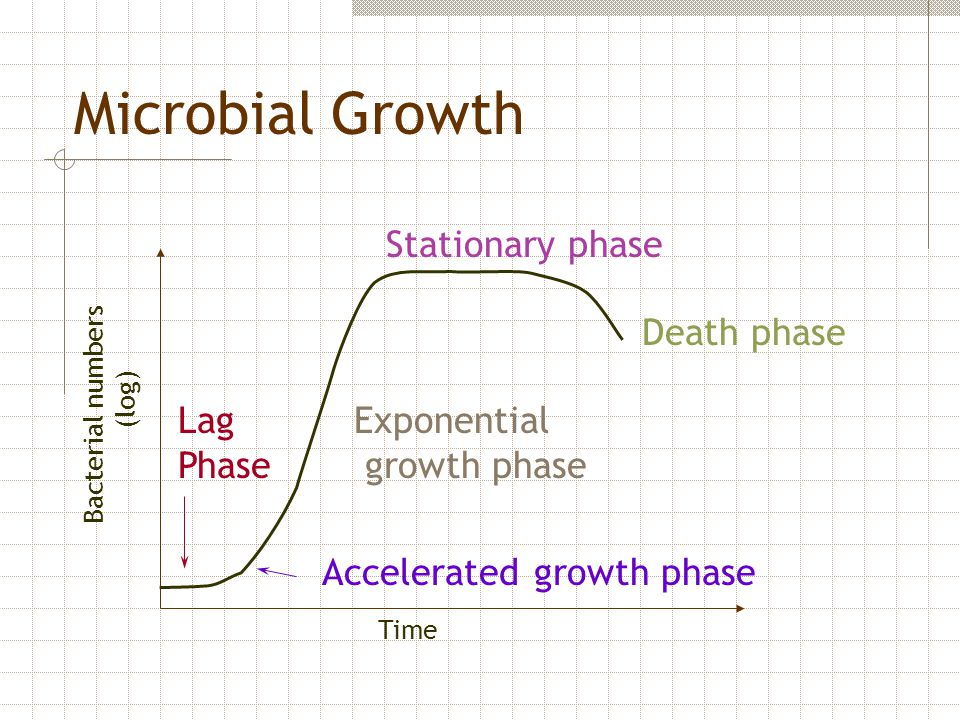 Microbial Growth Stationary phase Death phase Lag Phase Exponential