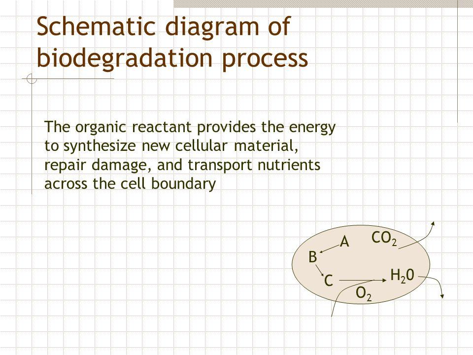 Schematic diagram of biodegradation process